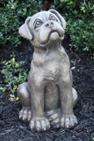 "13"" Puppy - Boxer"