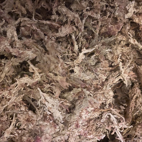 Terrarium Sphagnum Moss