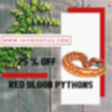 Red blood Pythons sale.png