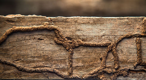 Termites eat wood surface, a wood that i