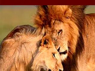 El León: Un liderazgo especial