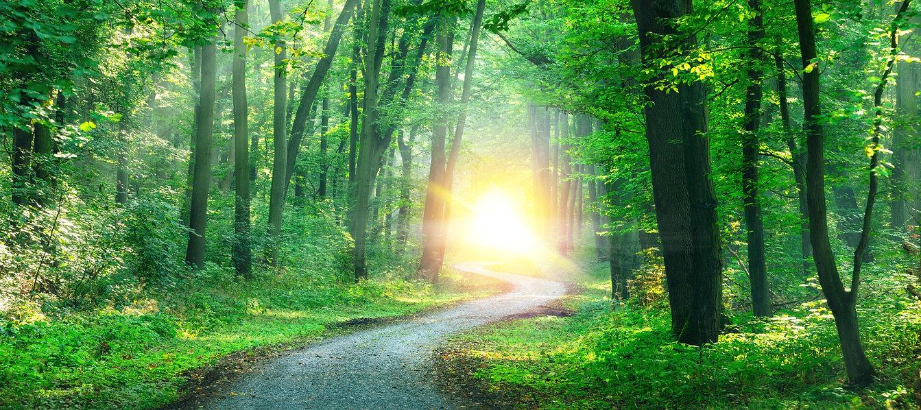 Winding gravel road through sunny green
