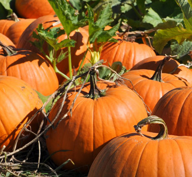 Welcome October and all the fun that comes with it!