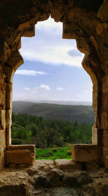אורי ברזילי- חלון היער