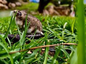 עידן שגיא וזיו יהב - חיים בג'ונגל