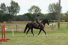 2015-09-13 horse show calcutta derby kelly 061.JPG