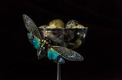 Cicada and Quail Eggs
