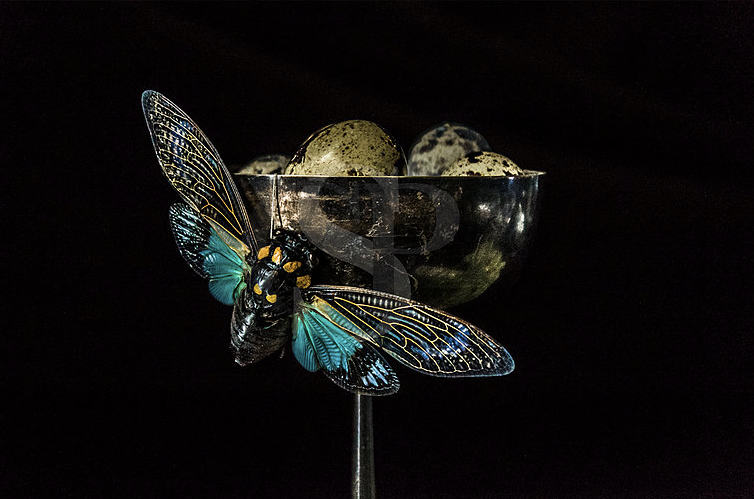 Cicada & Quail Eggs 24x24 11/11 5000