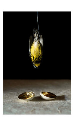 Yellow Finch & Gold Clams
