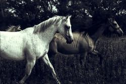 Accidental White Horse