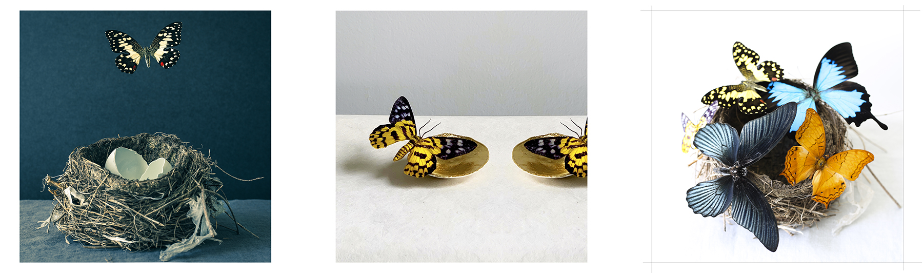 butterfly comp 1