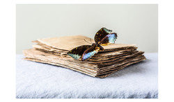 Blue Butterfly & Japanese Paper