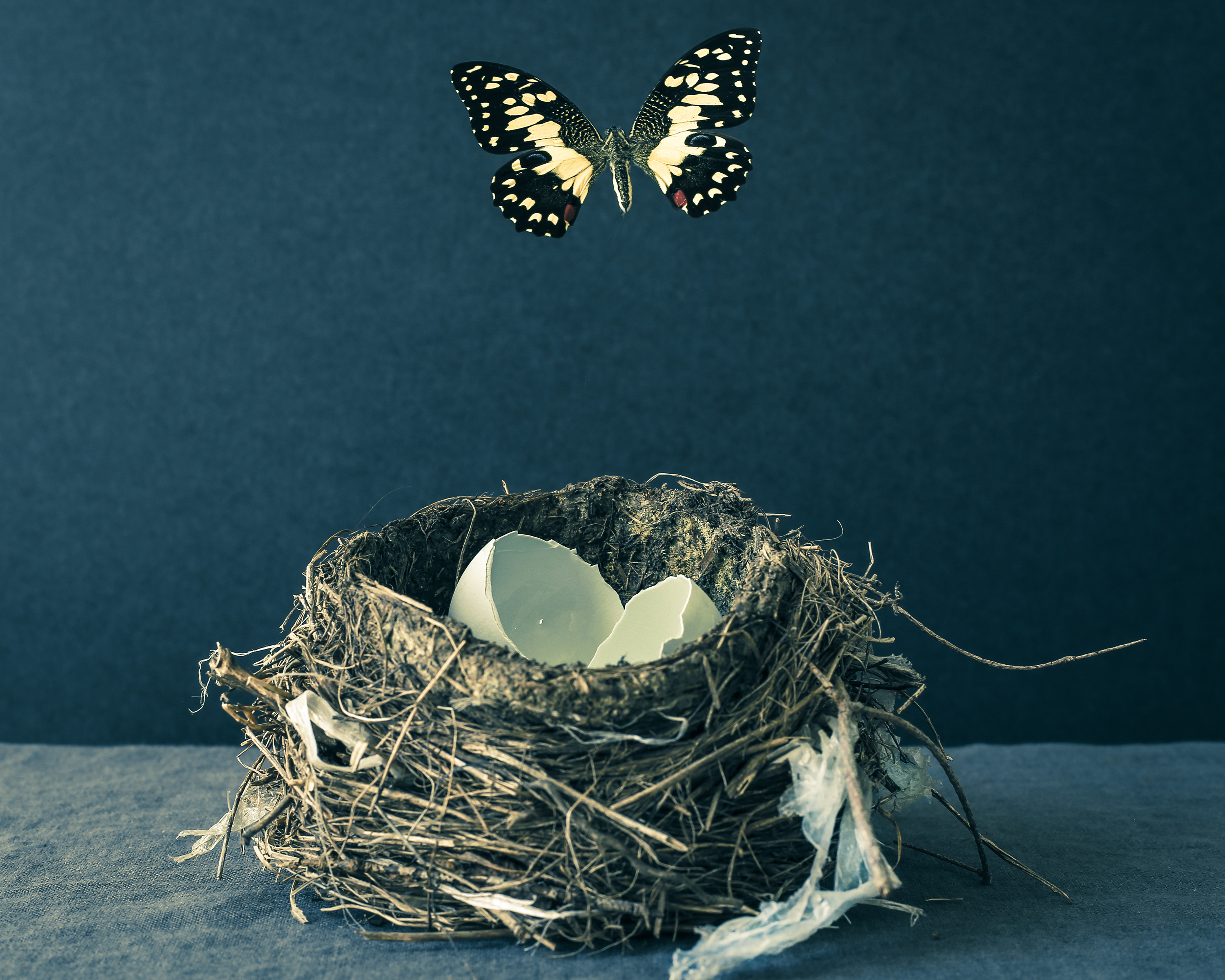Butterfly with Bird Nest and Blue Eggs