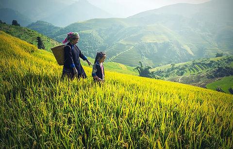 agriculture-1822446_960_720.jpg