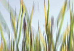 Grass waves 2