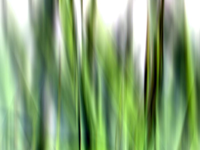 Grass waves 1
