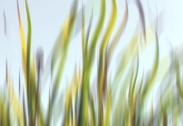 Grass Waves 3