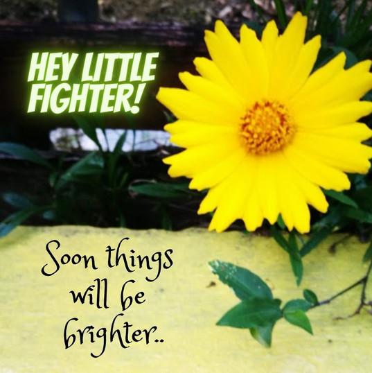 Hey little fighter!.jpg