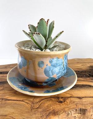 Living Succulent Planter - Prussian Crystalline