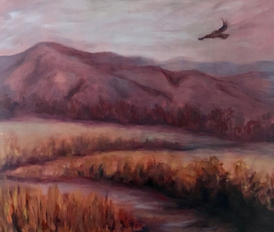 Hawk over Cades Cove.jpg
