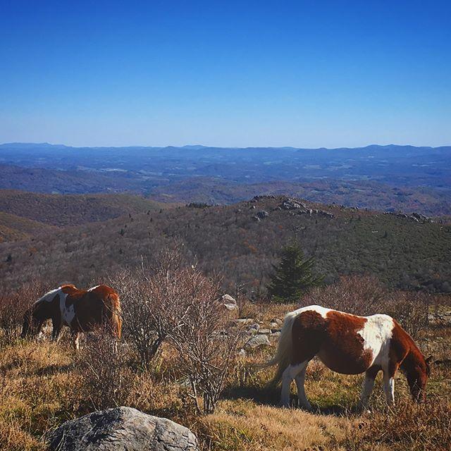 Sweet Appalachia