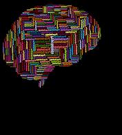 cranium-3350798_960_720 2.png