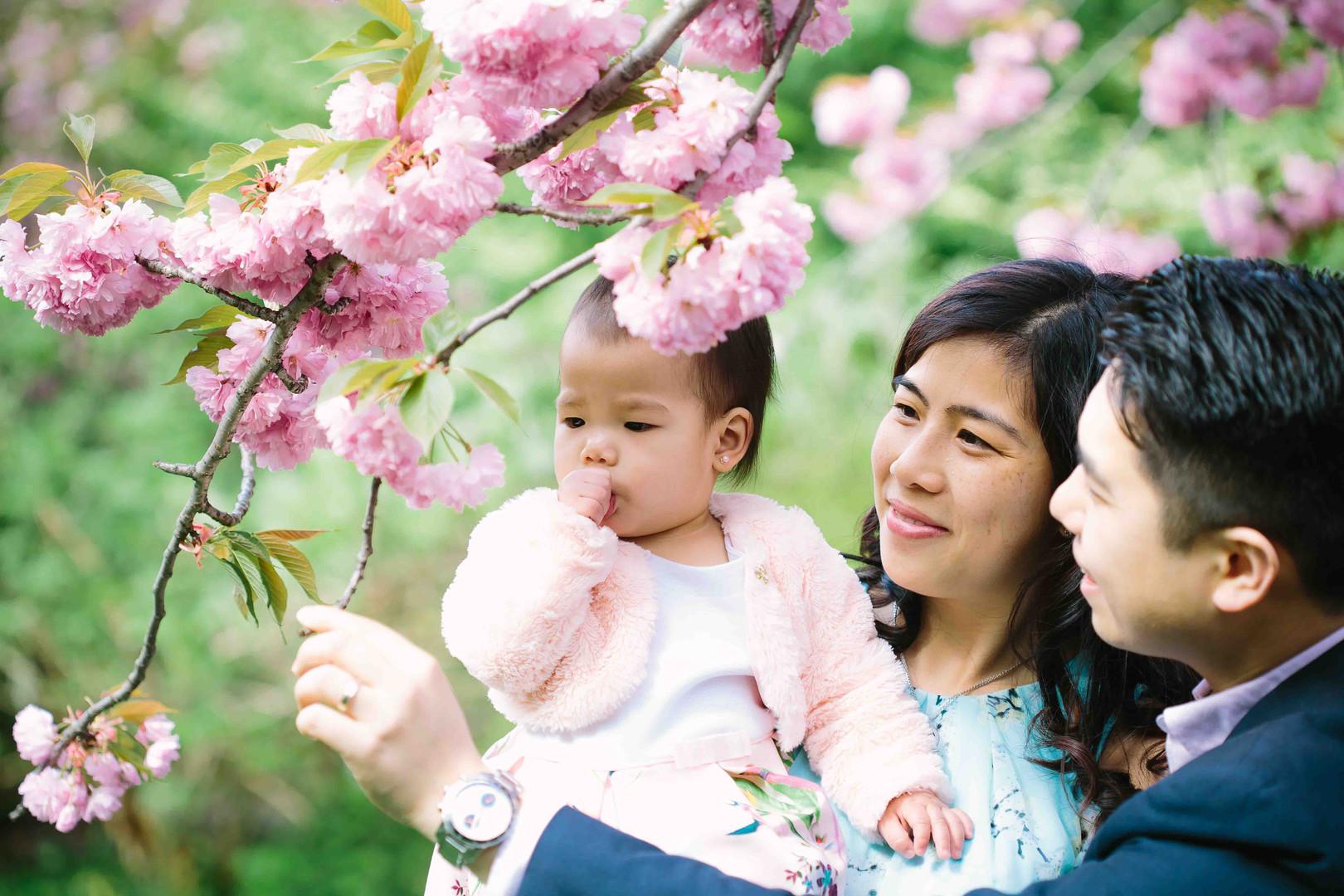 2019-goon-web-res-spring-cherry-blossom-