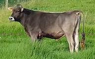pardo-suizo-cleofas.jpg