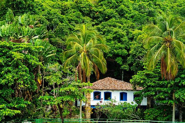 Anbau grüne Bananen für Kochbananenmehl