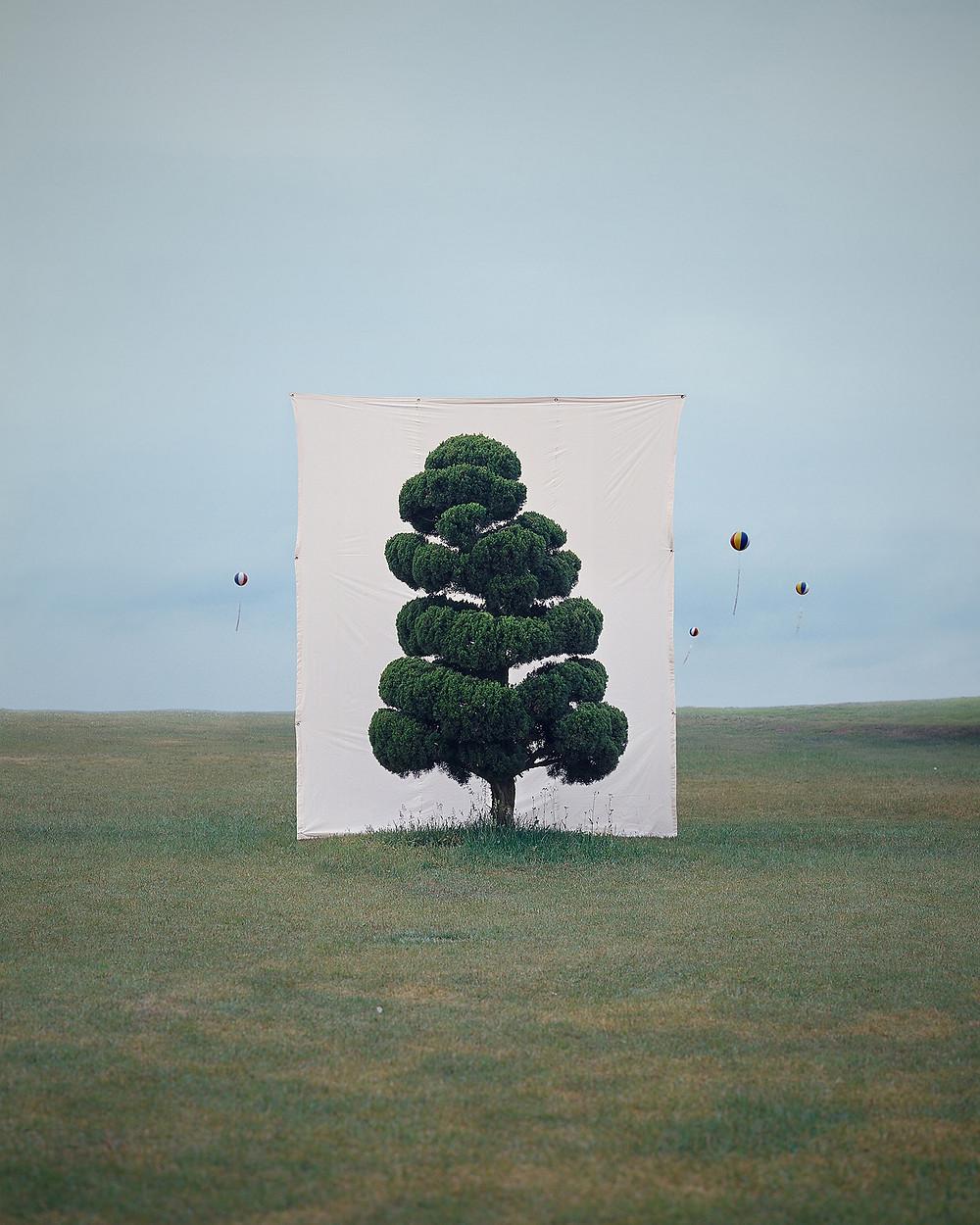 """Ли Мён Хо. """"Дерево"""""""