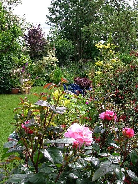The Tree Garden Kent Birling tree shrub rose