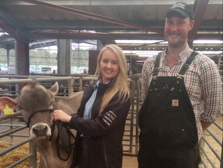 Youngstock Sale tops at 2,500 gns
