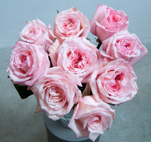 Pink Ou0027Hara Garden Rose Is A Lovely French Spiral Open Rose That Has A  Strong And Beautiful Fragrance. It Will Open Up In The Vase All The Way And  Has A ...