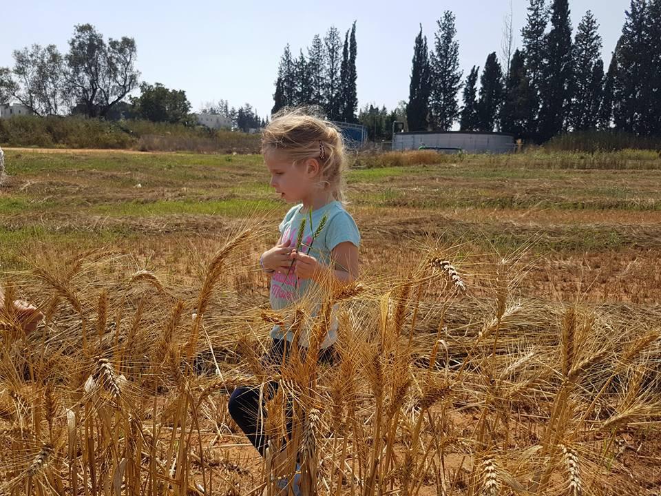 גל בשדה חיטה