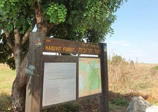 המלצת טיול ביער חרובית