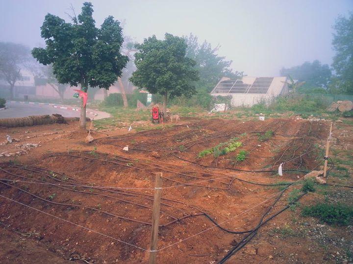 הגינה בתחילת דרכה
