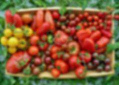 tomato-selection-2948560_1920.jpg
