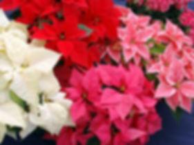 flowers-1728025_1920.jpg
