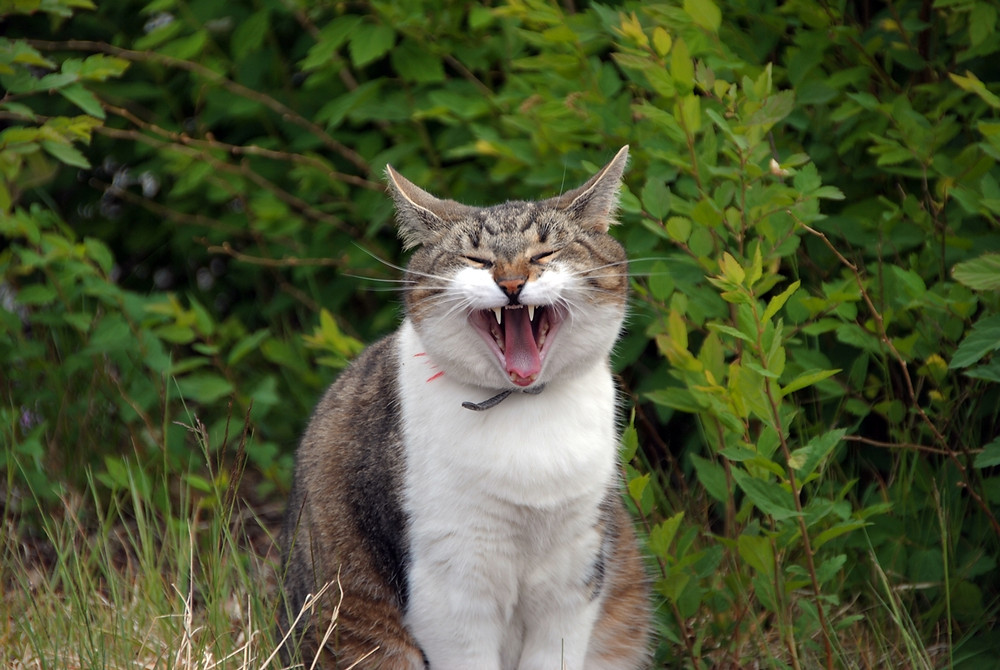 Salama the cat