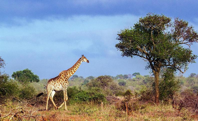 Hunting-destination-South-Africa.jpg