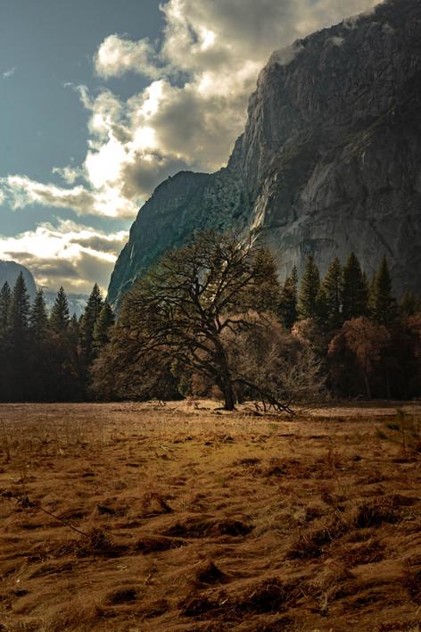 L'arbre d'El Capitan.