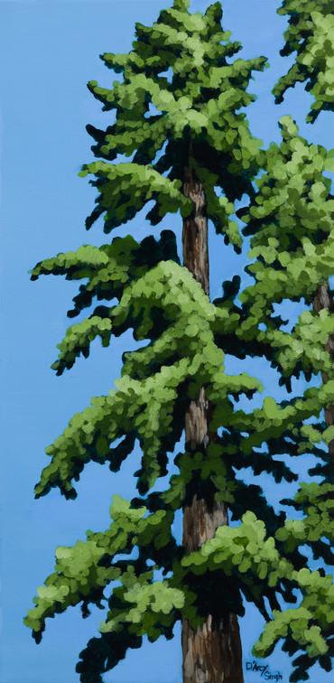 Pine Study 2