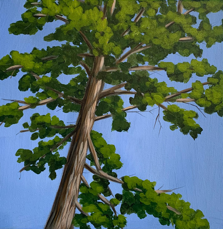 Nisswa Pine