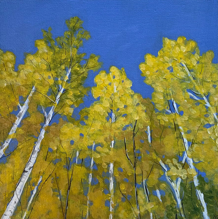 Tall Autumn Birches