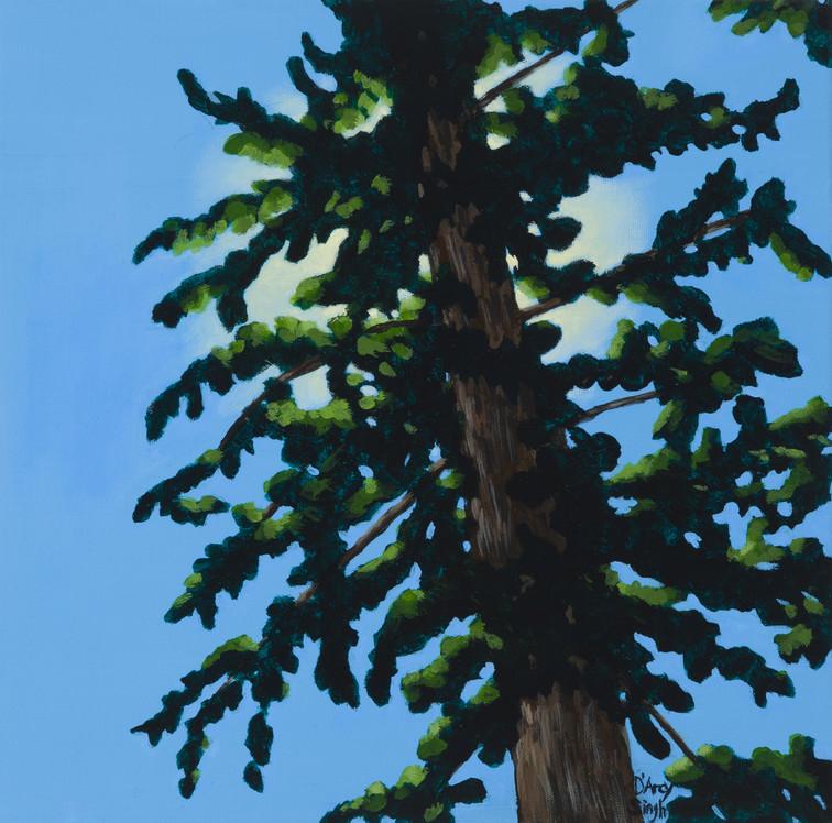 Sun and Pine 2