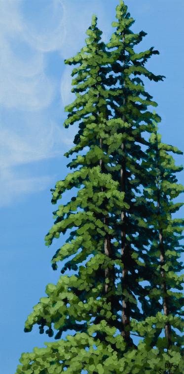 Pine Study 1