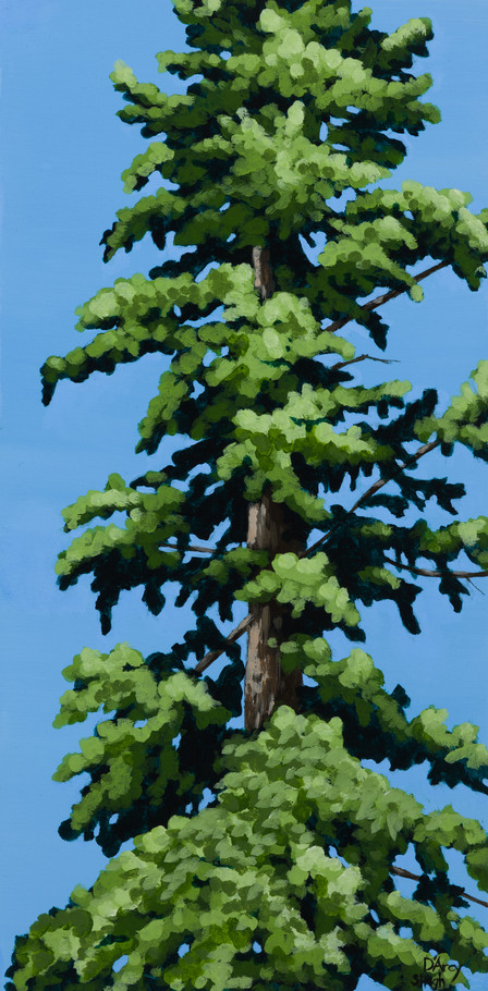 Pine Study 3