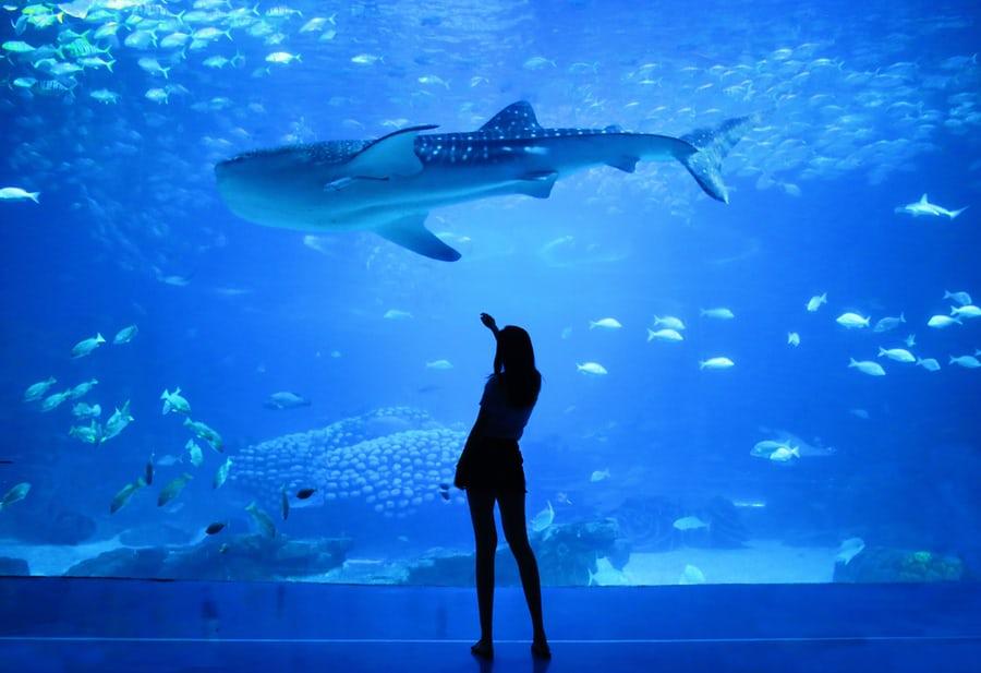 Osaka Kaiyukan Aquarium