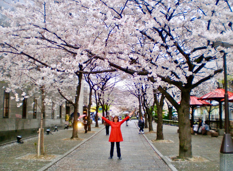 Japan and cherry blossoms!