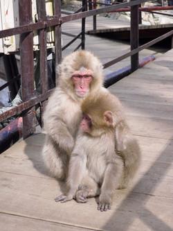 Snow Monkeys Nagano